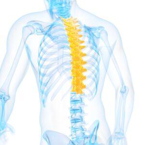 Anatomy of the Spine illustration
