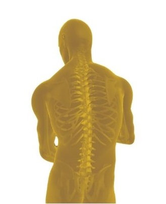 Back with spine in yellow for illustration for Garland TX patients