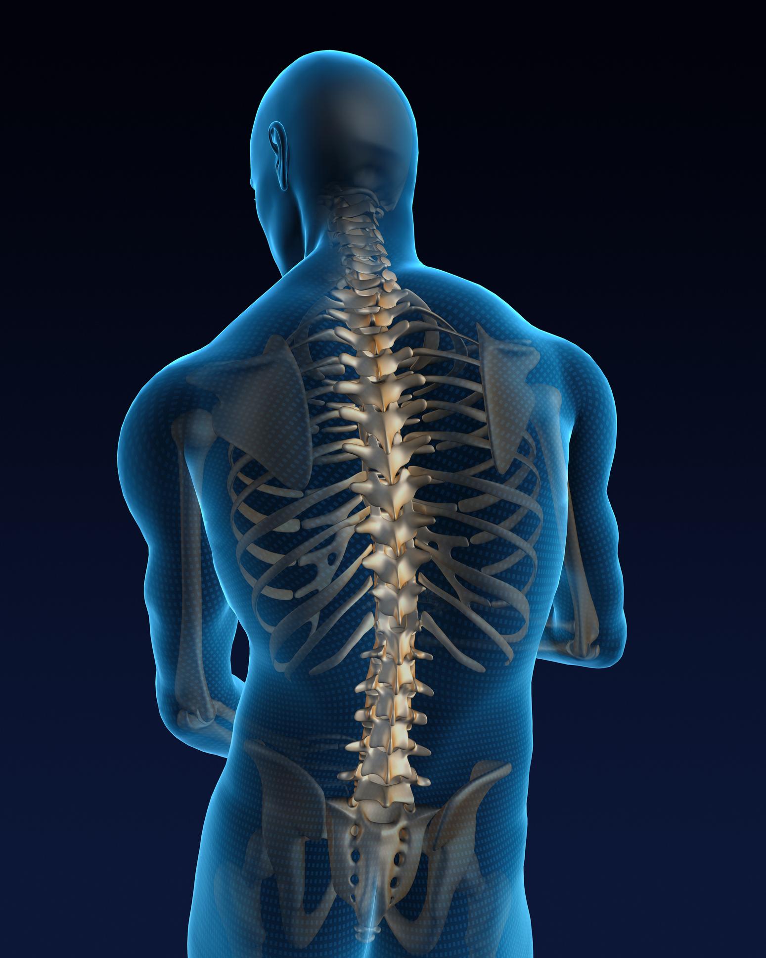 Human back illustration shown to Arlington TX patient