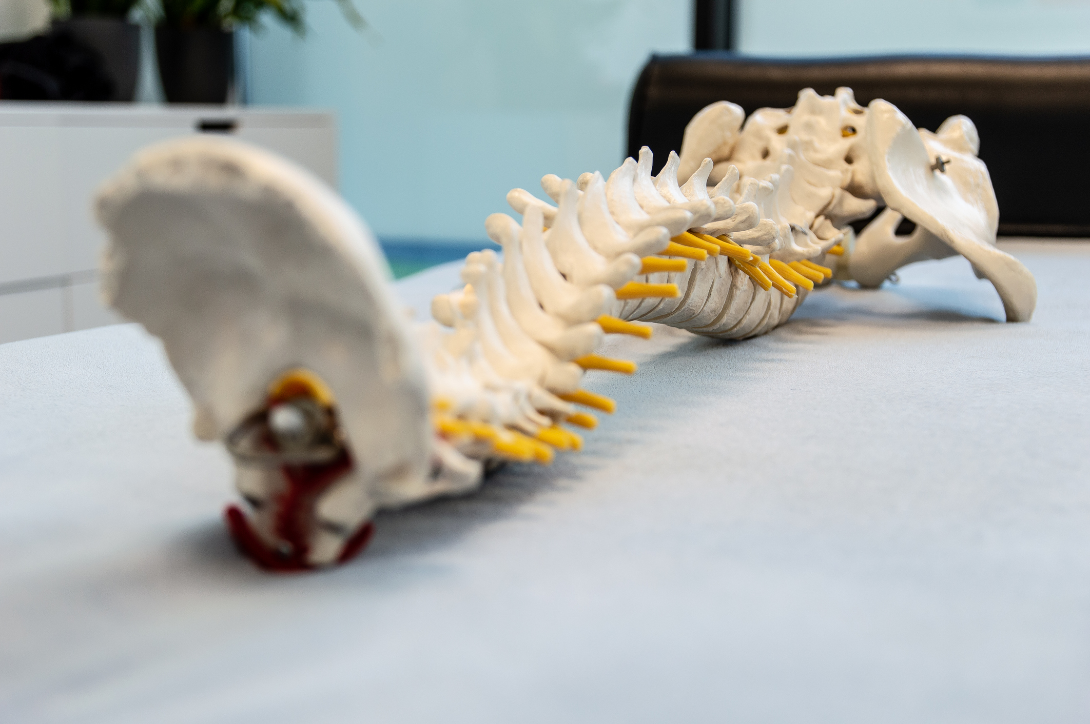 Close-Up Of Spine Anatomical Model for talking with Frisco TX patients