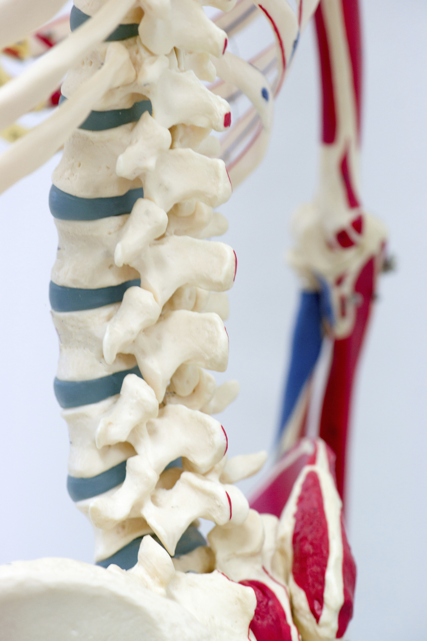 Human spine model shown to Grapevine TX patient