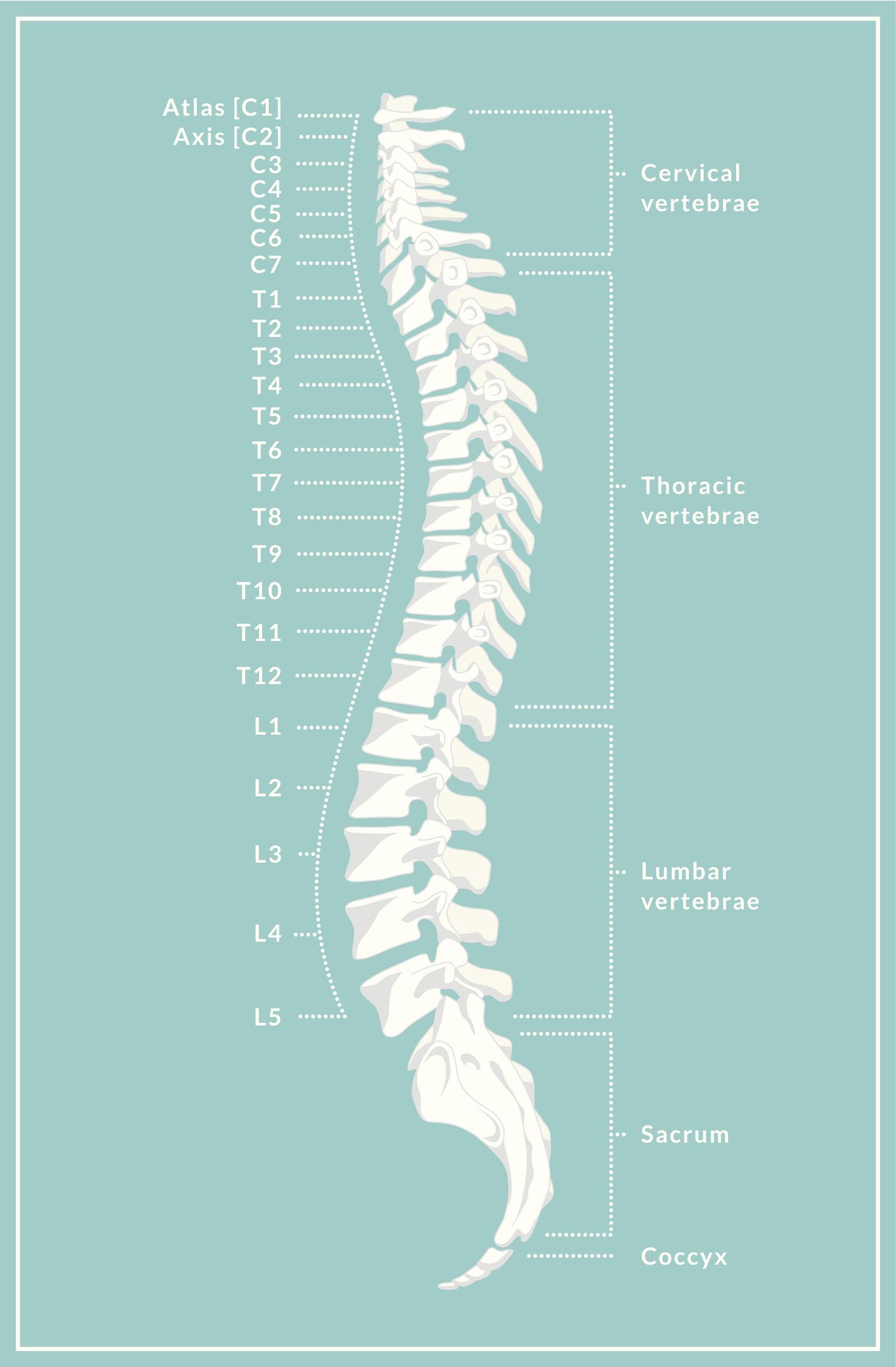 Spine Diagram shown to Arlington TX patient