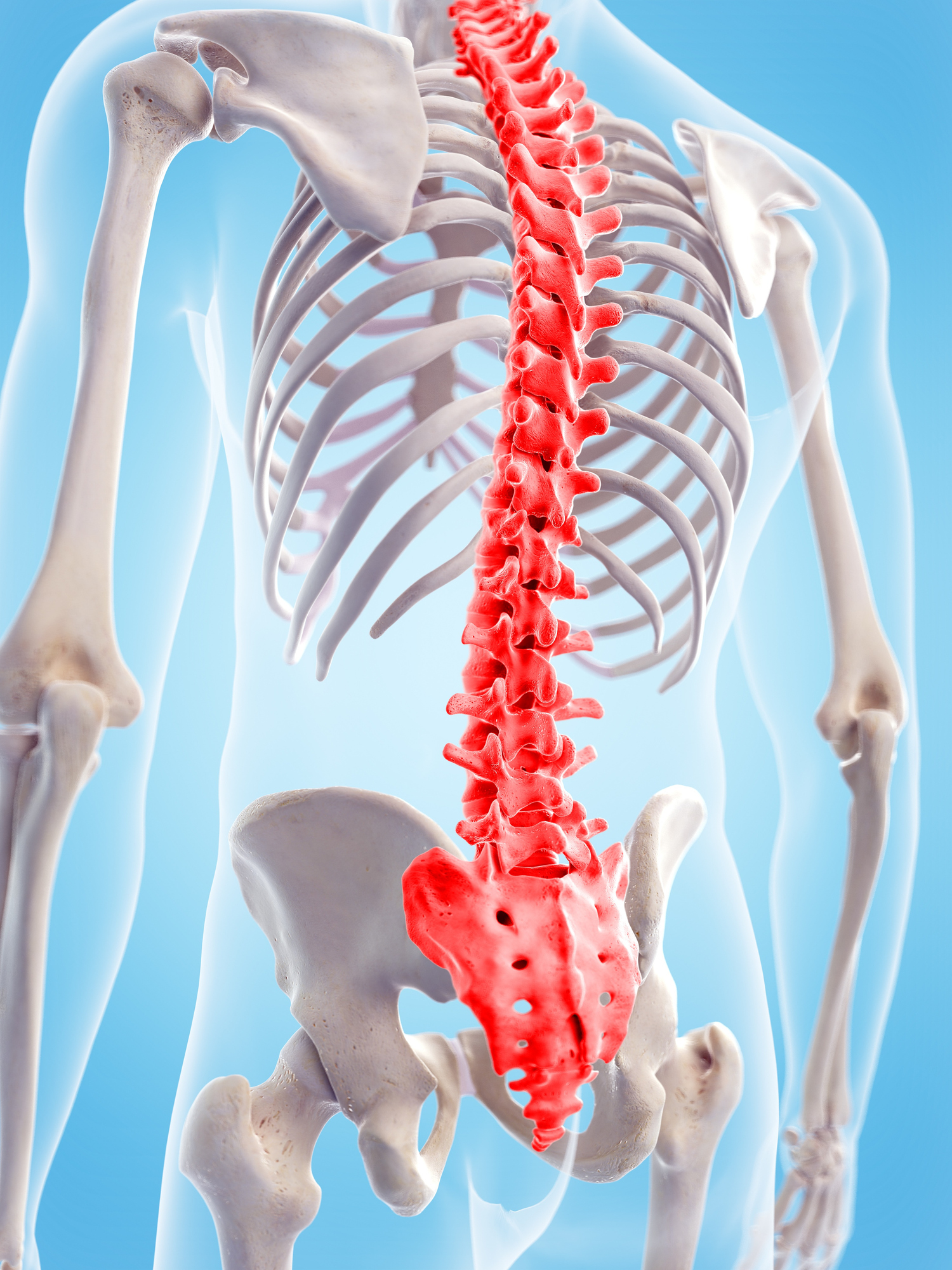Human spinal pain, illustration shown to Little Elm Patient